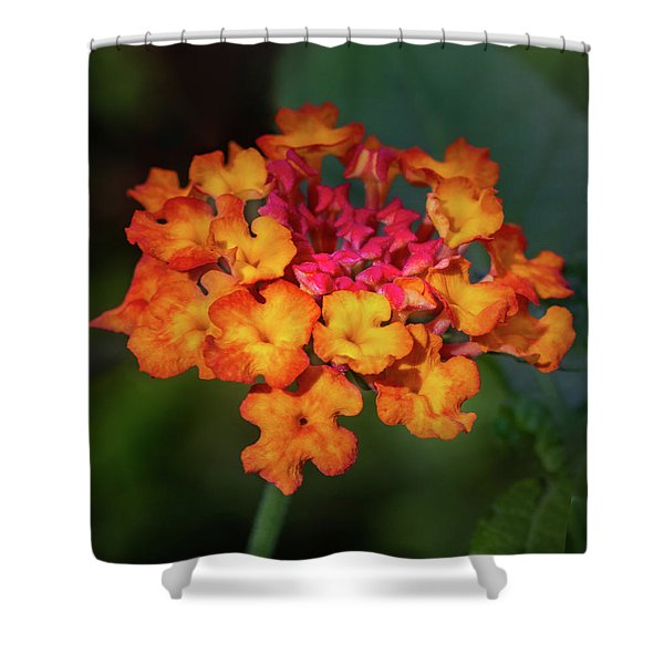 Summer Floral Colors Shower Curtain
