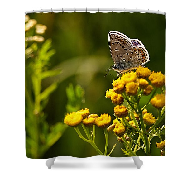 Summer Is In Full Swing Shower Curtain