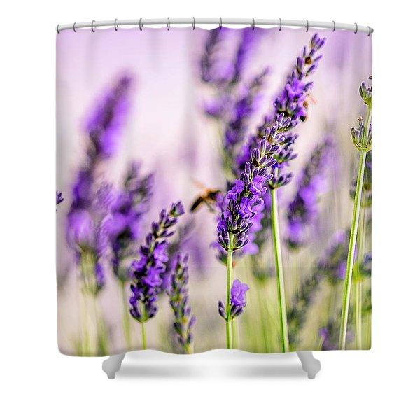 Summer Lavender  Shower Curtain
