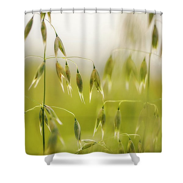 Summer Oat Shower Curtain