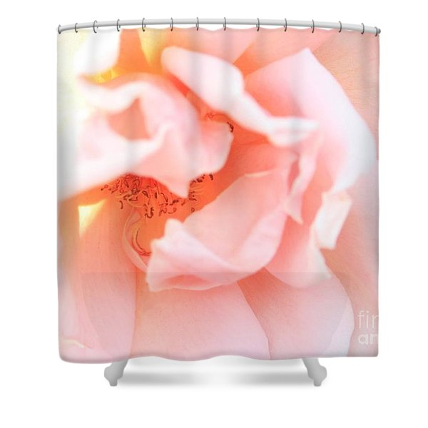 Sun-drenched Rose Shower Curtain