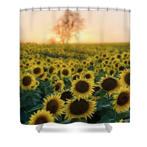 Sun Flowers Iv Shower Curtain