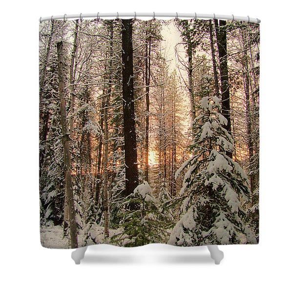 Sun Of Winter Trees Shower Curtain