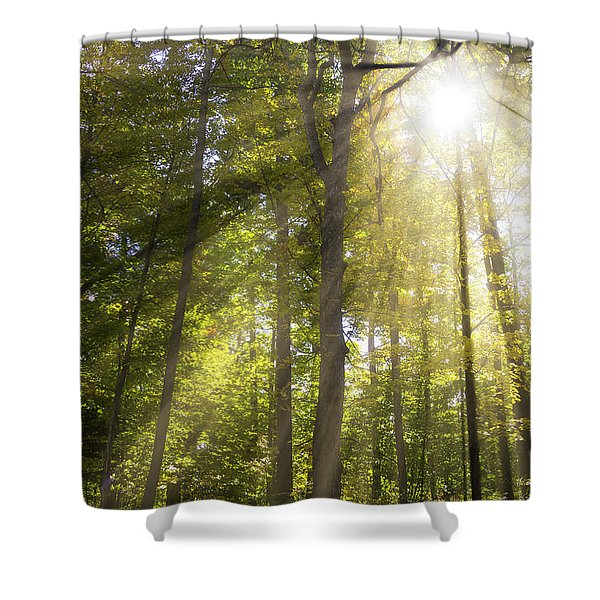 Sun Rays Through Trees Shower Curtain