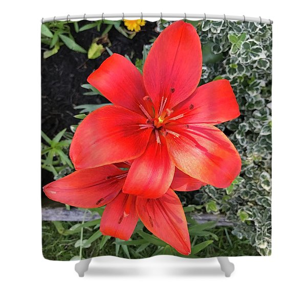 Sunbeam On Red Day Lily Shower Curtain