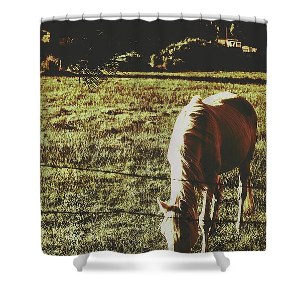 Sundown Horse Meadow Shower Curtain