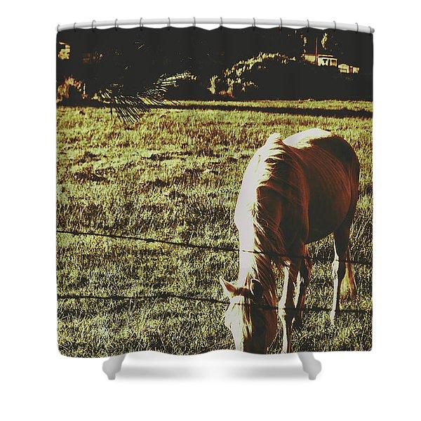 Sundown Horse Meadow Shower Curtain