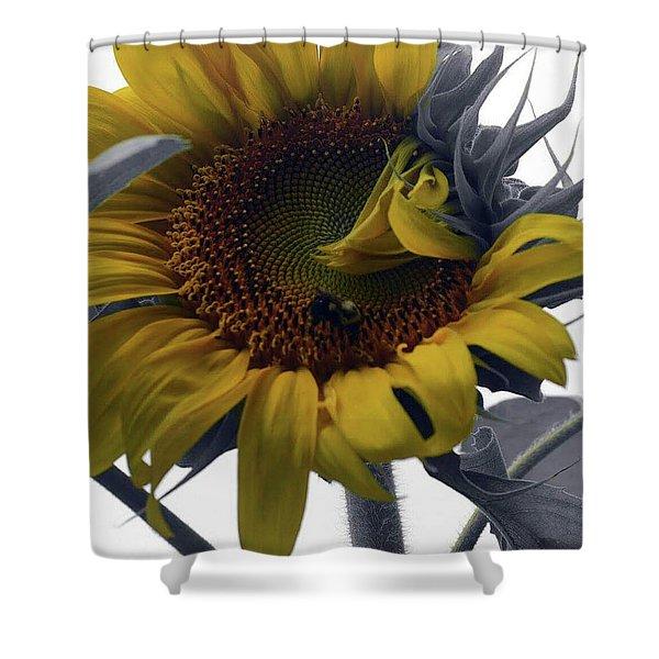 Sunflower Bee Shower Curtain