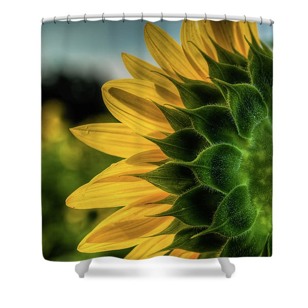 Sunflower Blooming Detailed Shower Curtain
