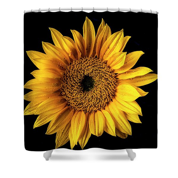 Sunflower Dew Covered Shower Curtain