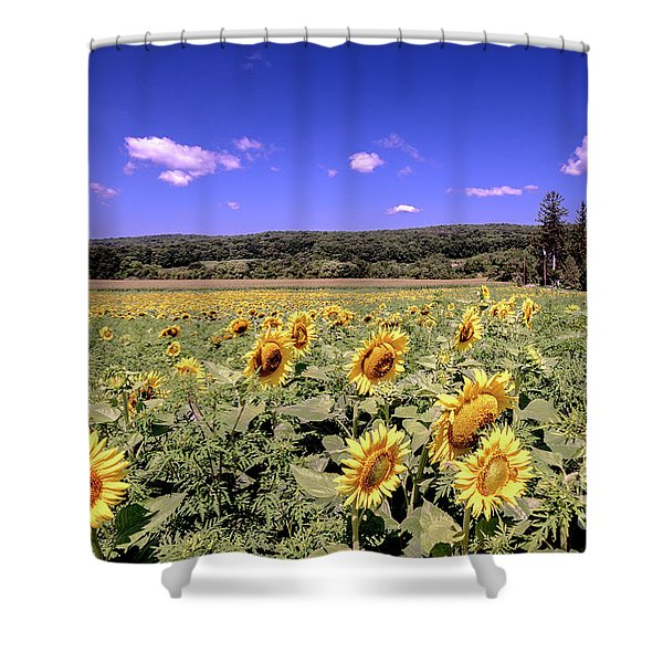 Sunflower Farm Shower Curtain