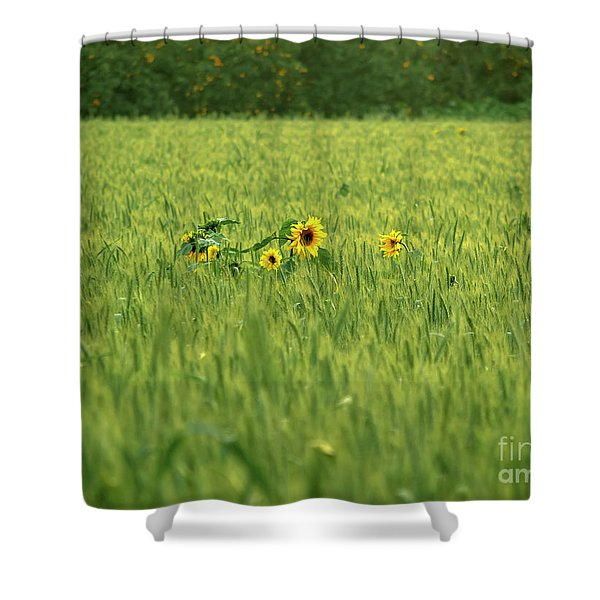 Sunflower In A Wheat Field Shower Curtain
