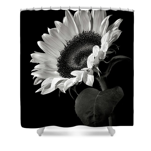 Sunflower In Black And White Shower Curtain