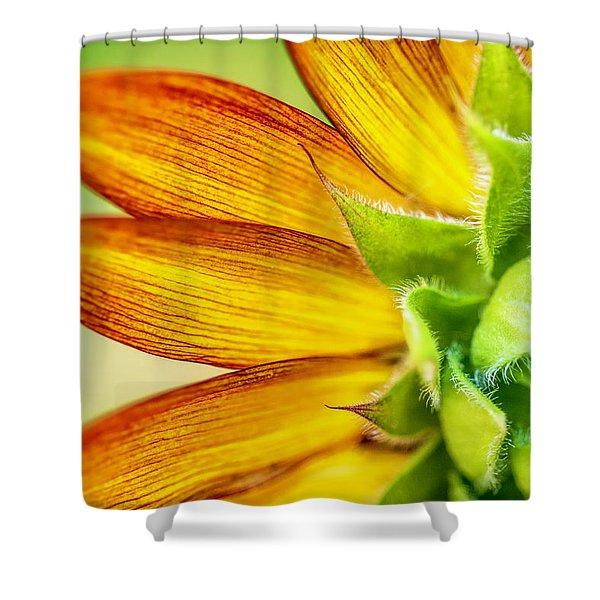 Sunflower Macro 1 Shower Curtain