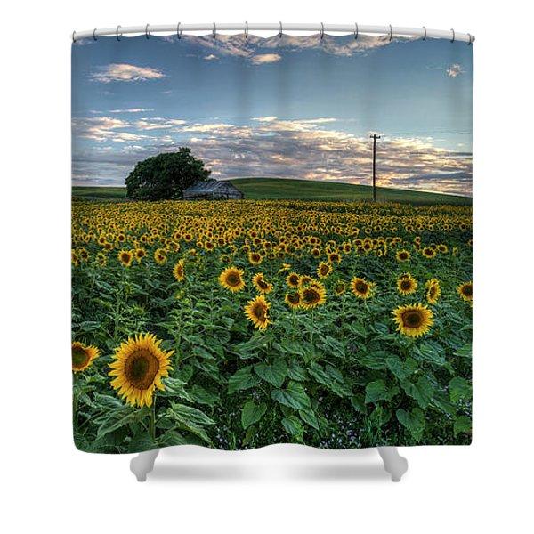 Sunflower Panorama Shower Curtain