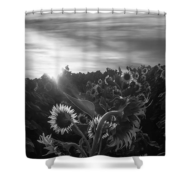 Sunflower Rise In Black And White Shower Curtain