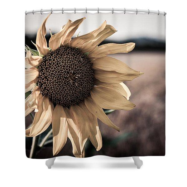 Sunflower Solitude Shower Curtain