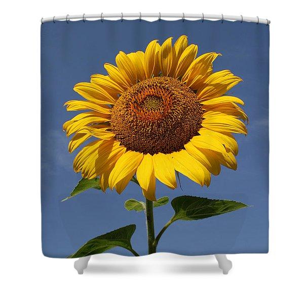 Sunflower Standing Tall Shower Curtain