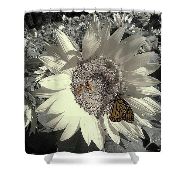 Sunflower Tint Shower Curtain