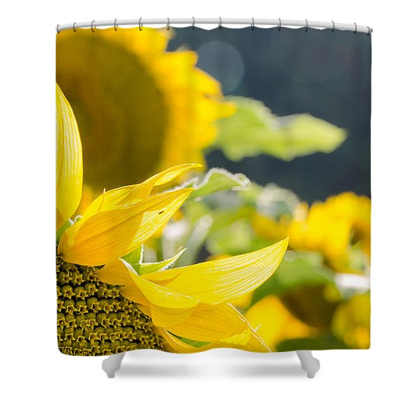 Sunflowers 14 Shower Curtain