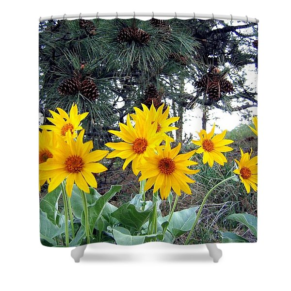 Sunflowers And Pine Cones Shower Curtain by Will Borden