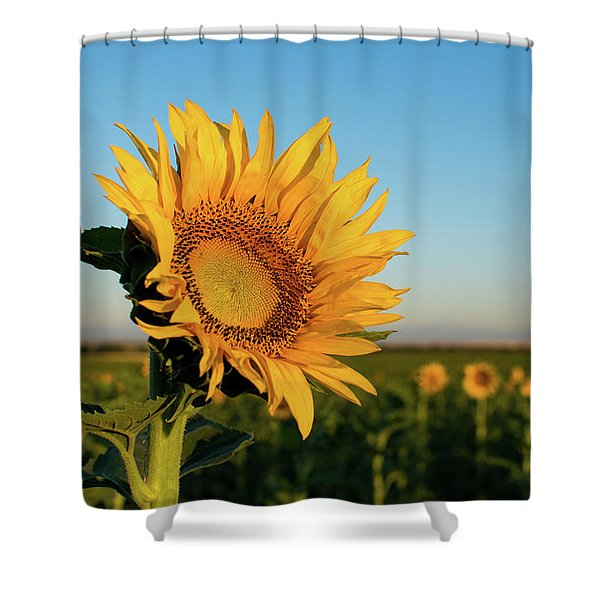 Sunflowers At Sunrise 2 Shower Curtain