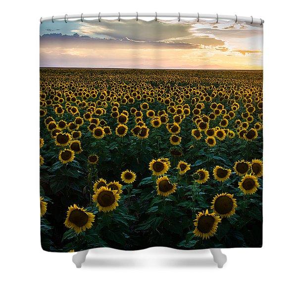 Sunflowers At Sunset Shower Curtain