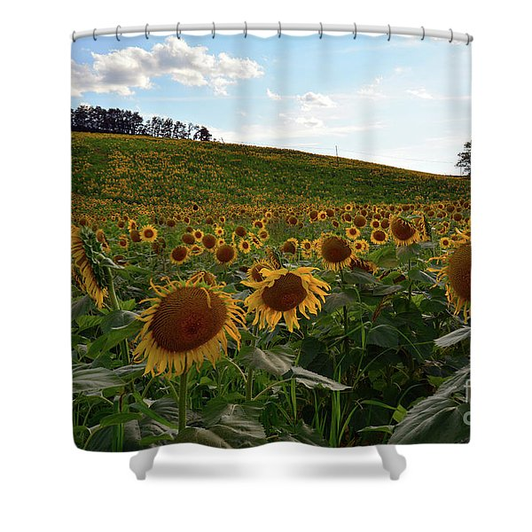 Sunflowers Fields  Shower Curtain