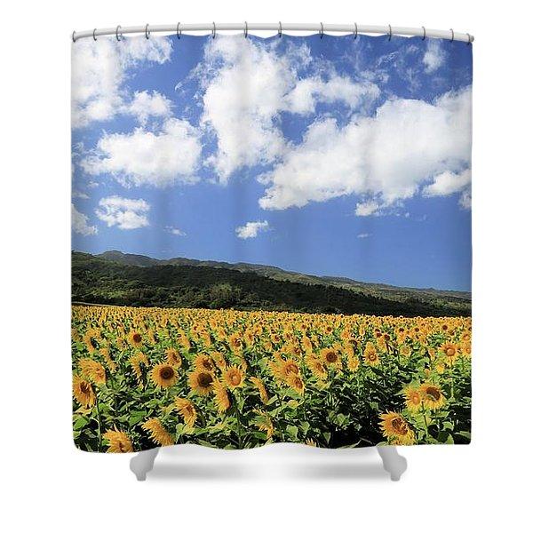 Sunflowers In Waialua Shower Curtain