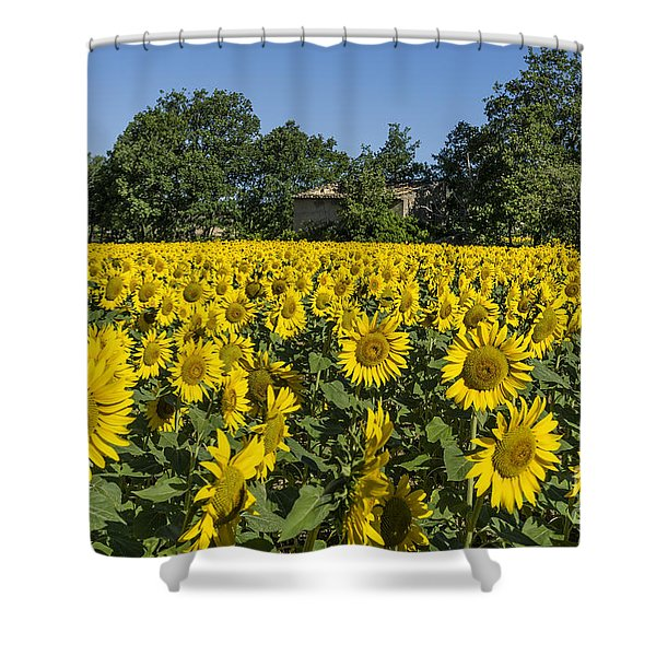 Shower Curtain featuring the photograph Sunflowers Provence  by Juergen Held