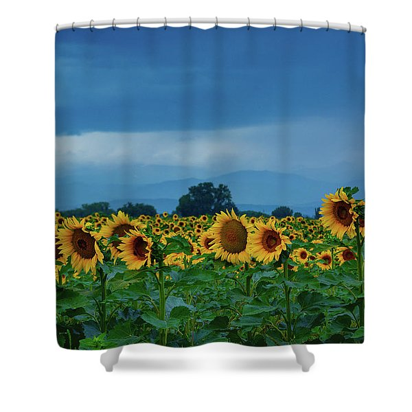Shower Curtain featuring the photograph Sunflowers Under A Stormy Sky by John De Bord