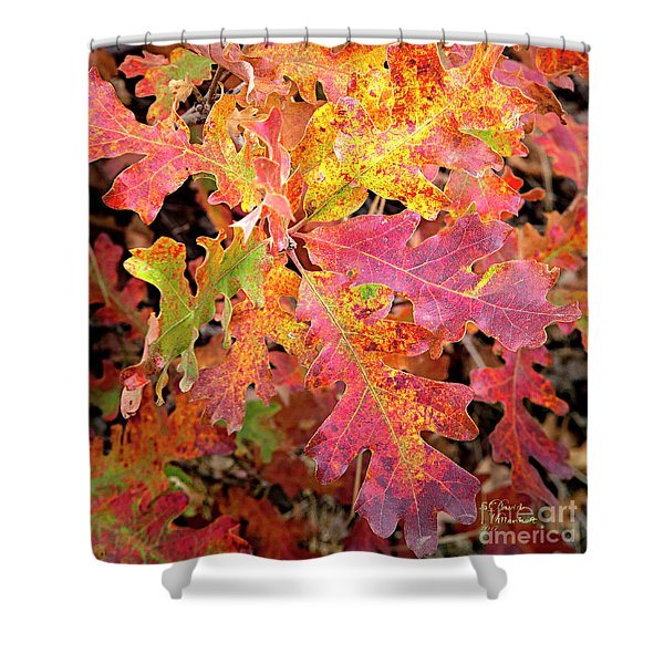 Shower Curtain featuring the photograph Sunlight Leaves by David Millenheft