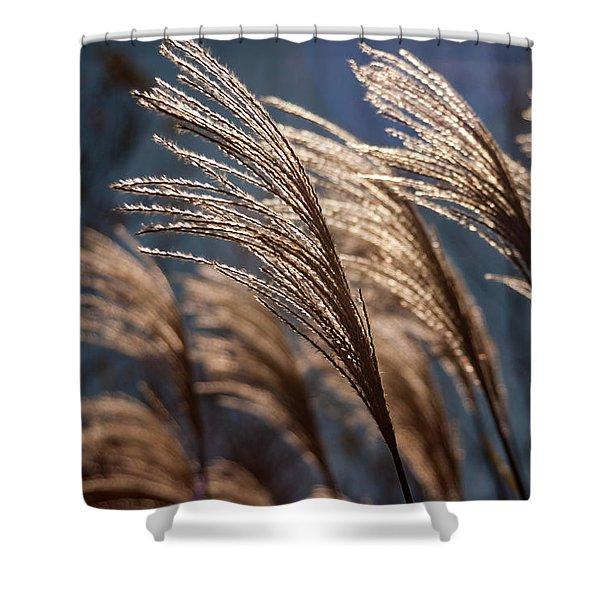Sunlit Grass Shower Curtain