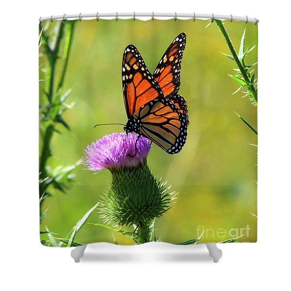 Sunlit Monarch  Shower Curtain
