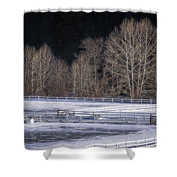 Shower Curtain featuring the photograph Sunlit Trees by Tom Singleton