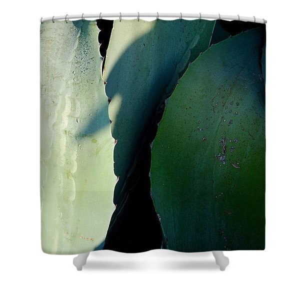 Sunlit Wild Agave  Shower Curtain
