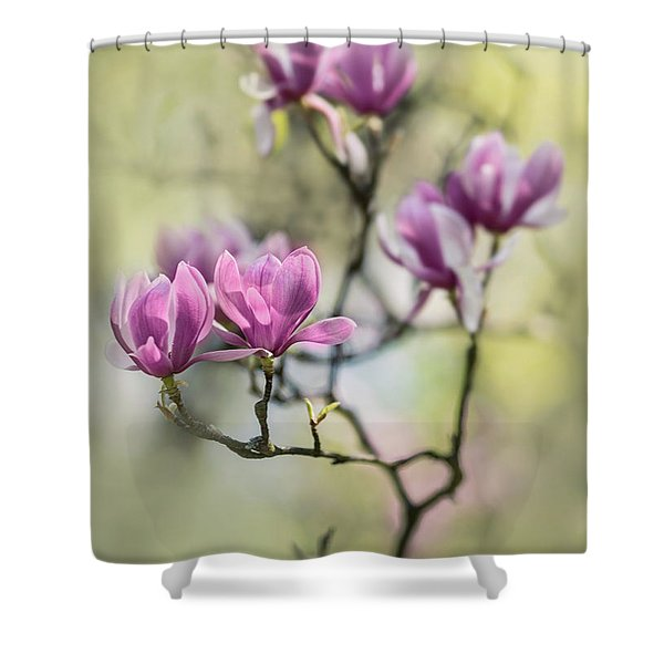 Shower Curtain featuring the photograph Sunny Impression With Pink Magnolias by Jaroslaw Blaminsky