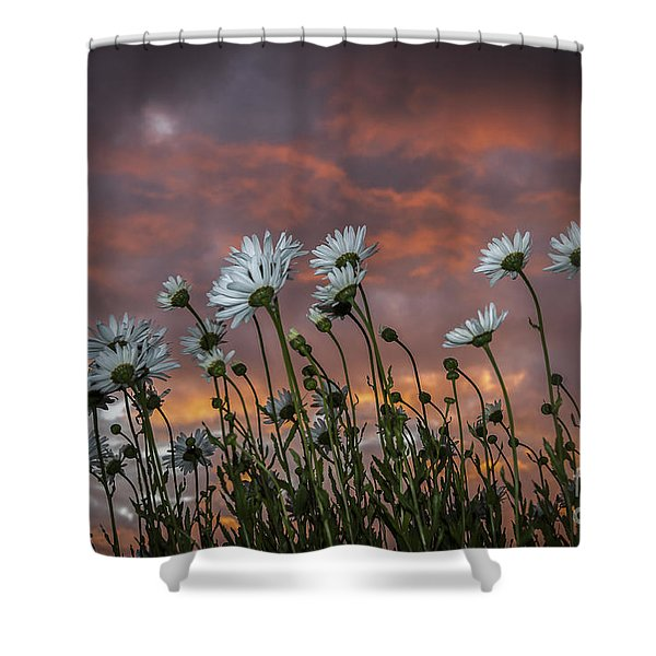 Sunset And Daisies Shower Curtain