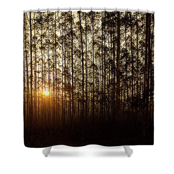 Sunset Behind Row Of Trees In Sihlouette Shower Curtain