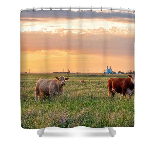 Sunset Cattle Shower Curtain