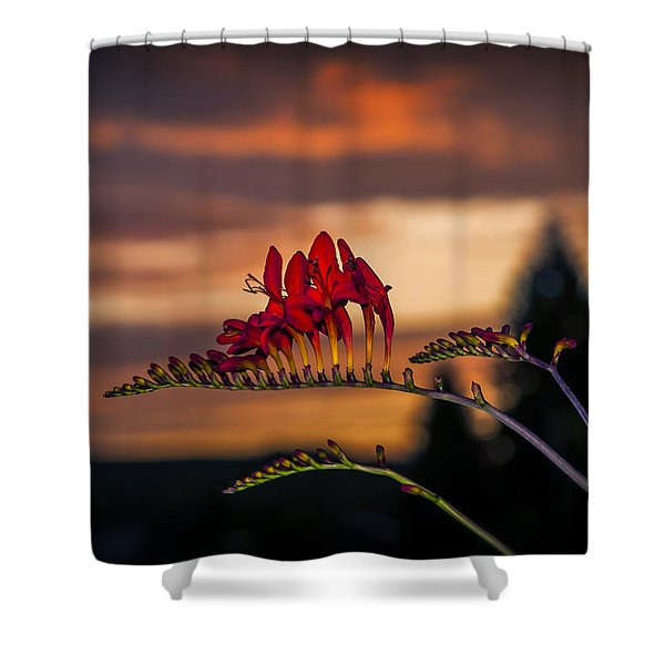 Sunset Crocosmia Shower Curtain