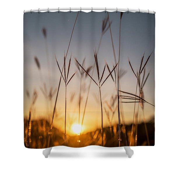 Sunset Grass Shower Curtain
