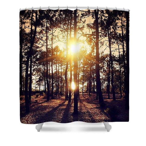 Sunset On Trees Shower Curtain