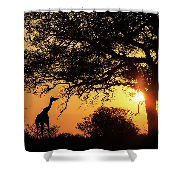 Sunset Silhouette Giraffe Eating From Tree Shower Curtain