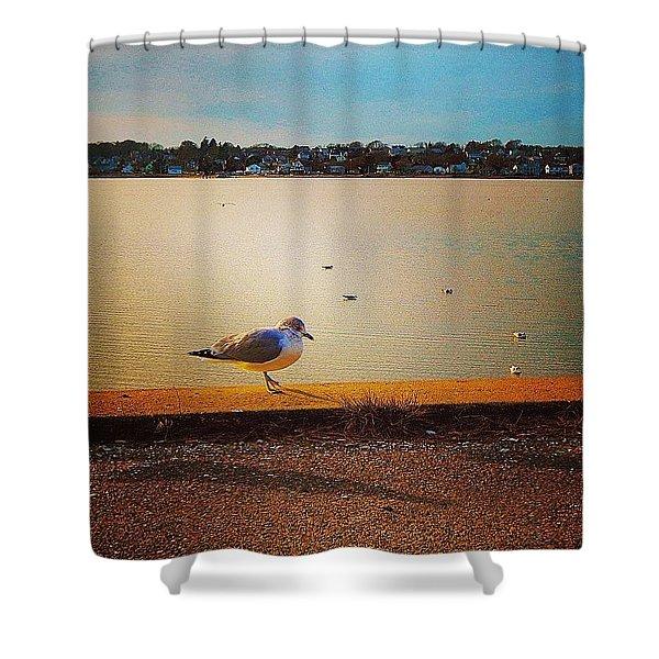 Seagulls Stop Shower Curtain