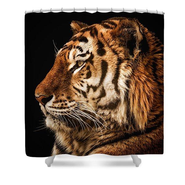 Sunset Tiger Shower Curtain