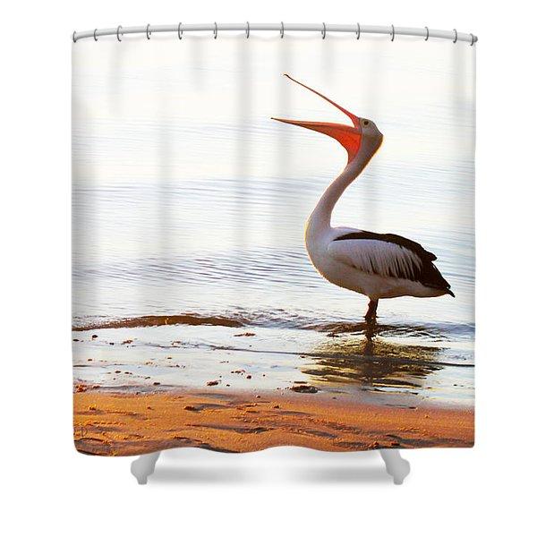 Sunshine Coast Pelican Shower Curtain
