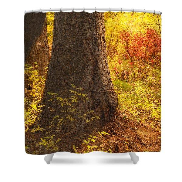 Sunstream Shower Curtain