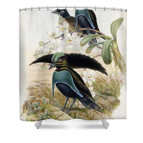 Superb Bird Of Paradise  Shower Curtain
