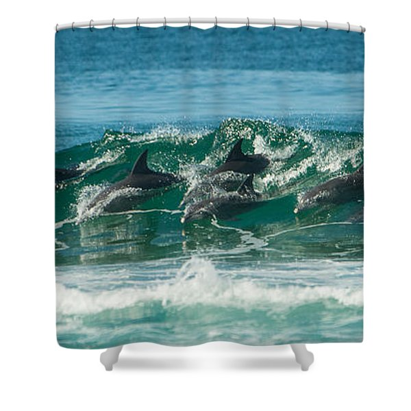 Surfing Dolphins 4 Shower Curtain